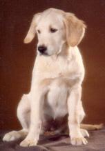 Goldie, född 1980