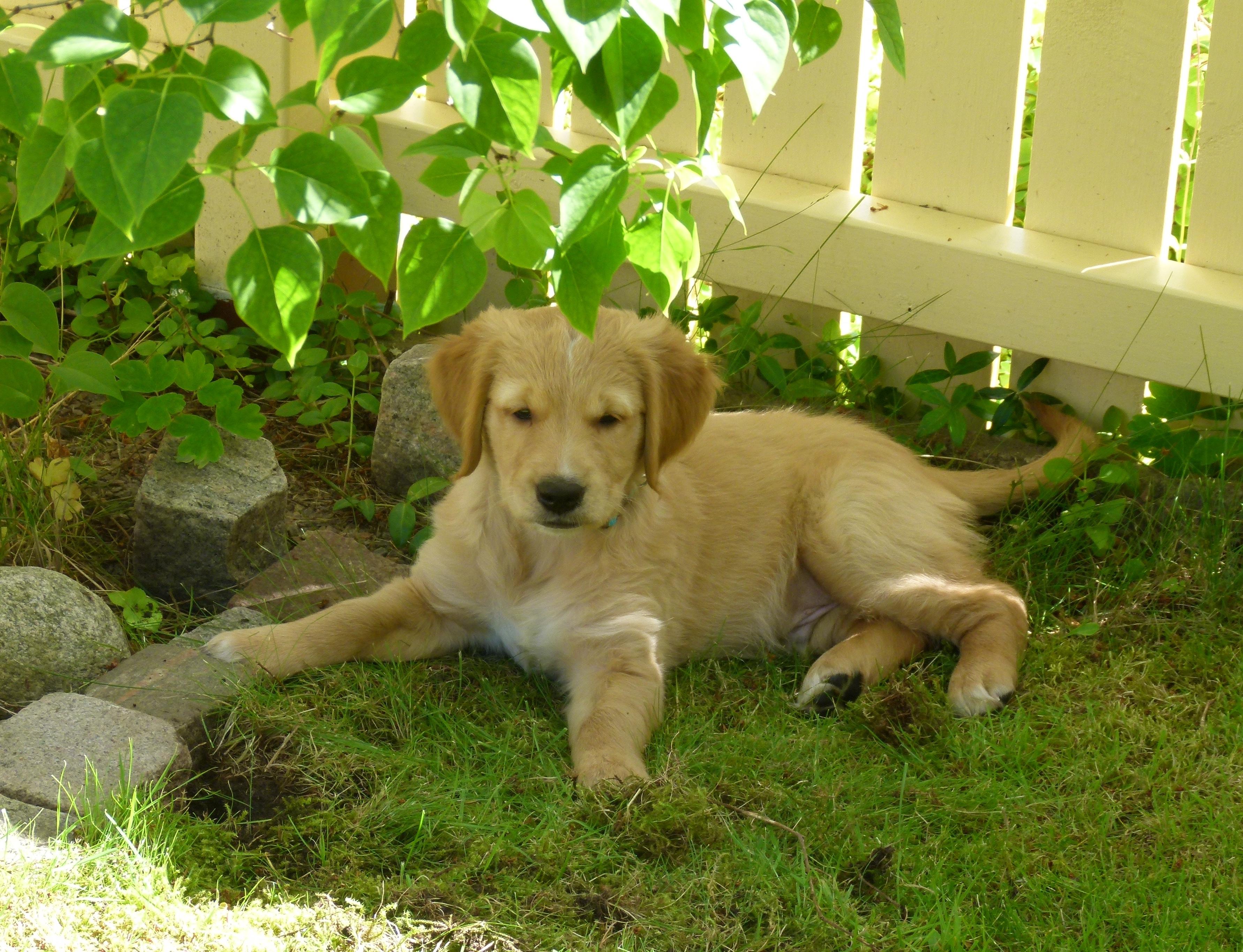 Nio veckor gammal, har fått en egen trädgård att gräva i.