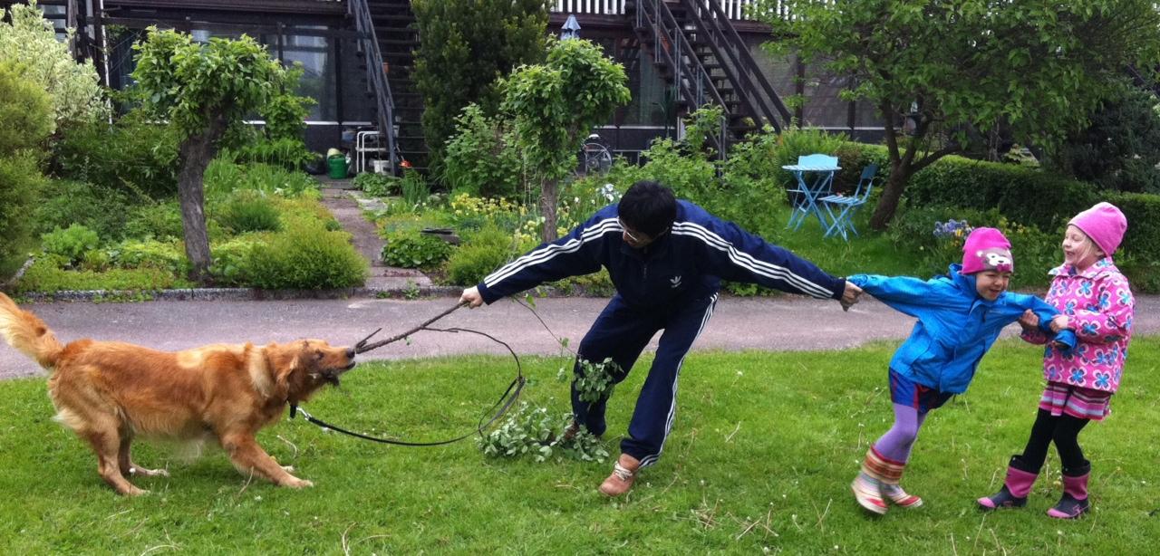 Ziggy busar med grannarnas barn.  Att leka dragkamp med en apportör kanske motverkar apport-träningen, men det är svårt att hindra barn och hundar från det som är så roligt...