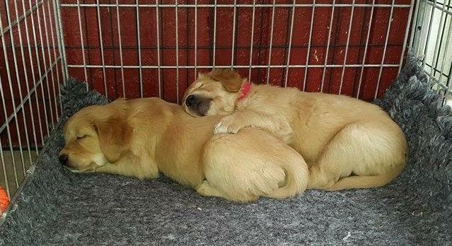 Bästa vänner sover tätt...
